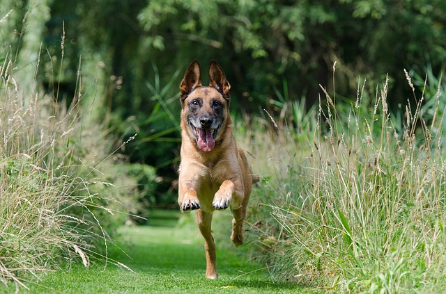 teaching your dog how to behave properly - Teaching Your Dog How To Behave Properly