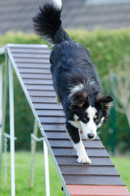 training your dog has never been this simple before 1 - Training Your Dog Has Never Been This Simple Before
