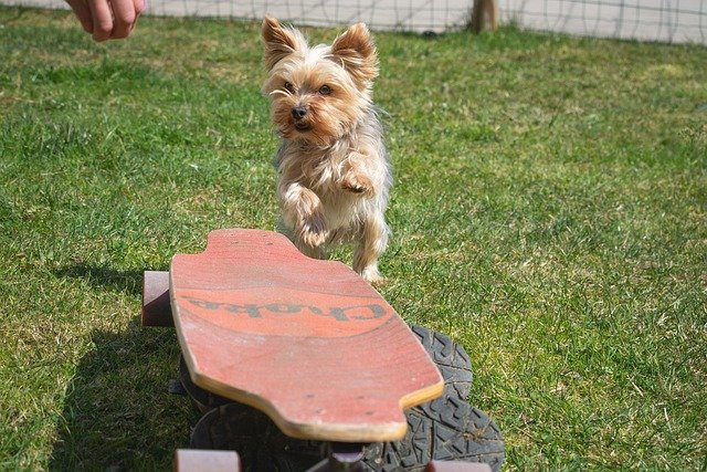 problems with your puppy try these tips 1 - Problems With Your Puppy? Try These Tips!