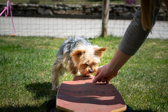 how to break bad habits in your canine with training 2 - How To Break Bad Habits In Your Canine With Training