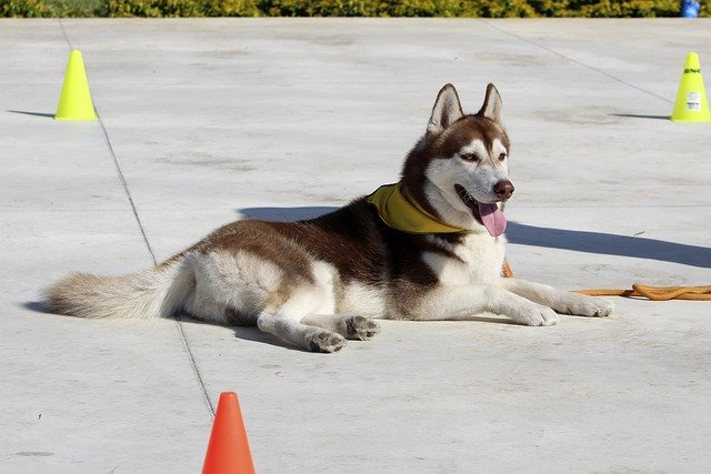 tired of your dog ruling the roost check out these simple tips to train your pet - Tired Of Your Dog Ruling The Roost? Check Out These Simple Tips To Train Your Pet!