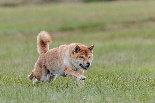 train your dog with a few easy tips 1 - Train Your Dog With A Few Easy Tips