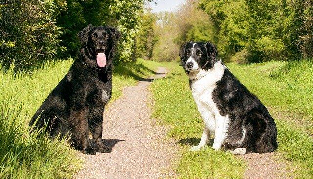train a dog by training its owner 1 - Train A Dog By Training Its Owner