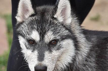 train a dog by training its owner - Train A Dog By Training Its Owner