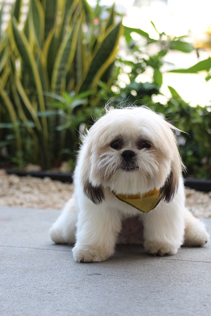 great ideas to help you with your training your dog - Great Ideas To Help You With Your Training Your Dog