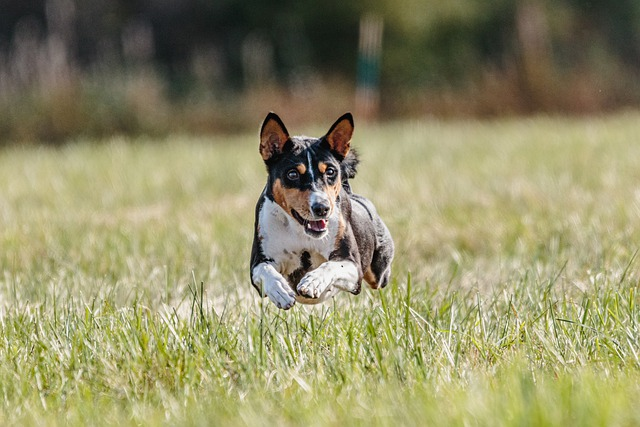 tips and tricks to living with a wellbehaved dog - Tips And Tricks To Living With A Well-Behaved Dog