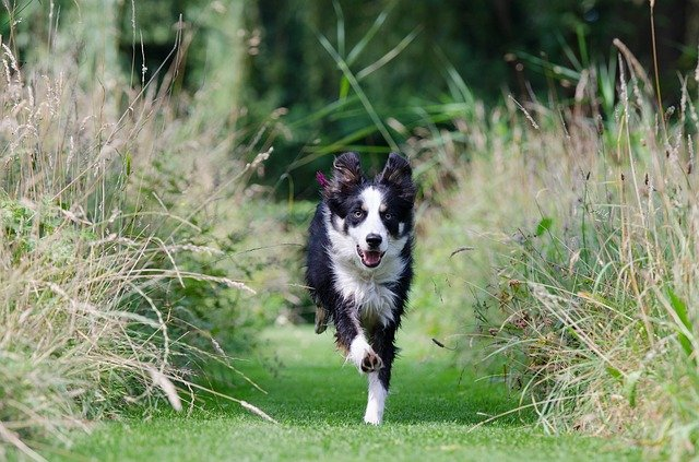 tips that your dog will respond to 1 - Tips That Your Dog Will Respond To