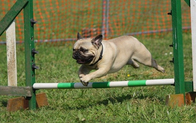 simple and easy puppy training tips - Simple And Easy Puppy Training Tips