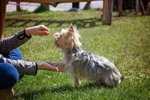 advice for training your dog quickly and efficiently 1 - Advice For Training Your Dog Quickly And Efficiently