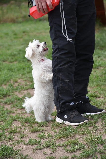 following these steps can make training your dog easy 2 - Following These Steps Can Make Training Your Dog Easy