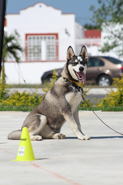 dog leash training the essential requirement to control your dog in public places - Dog Leash Training, The Essential Requirement To Control Your Dog In Public Places