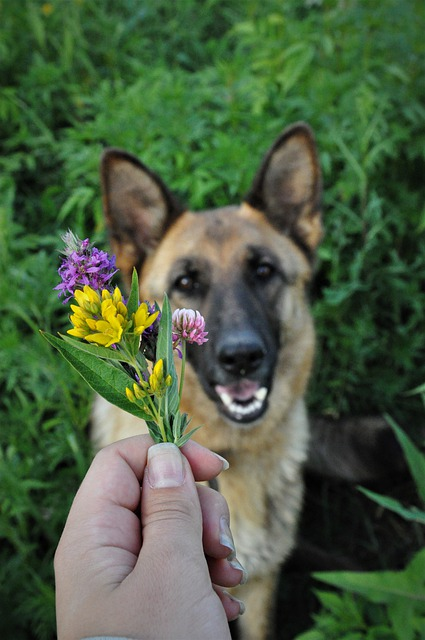simple ways towards making longterm changes in your dogs behavior 1 - Simple Ways Towards Making Long-Term Changes In Your Dog's Behavior