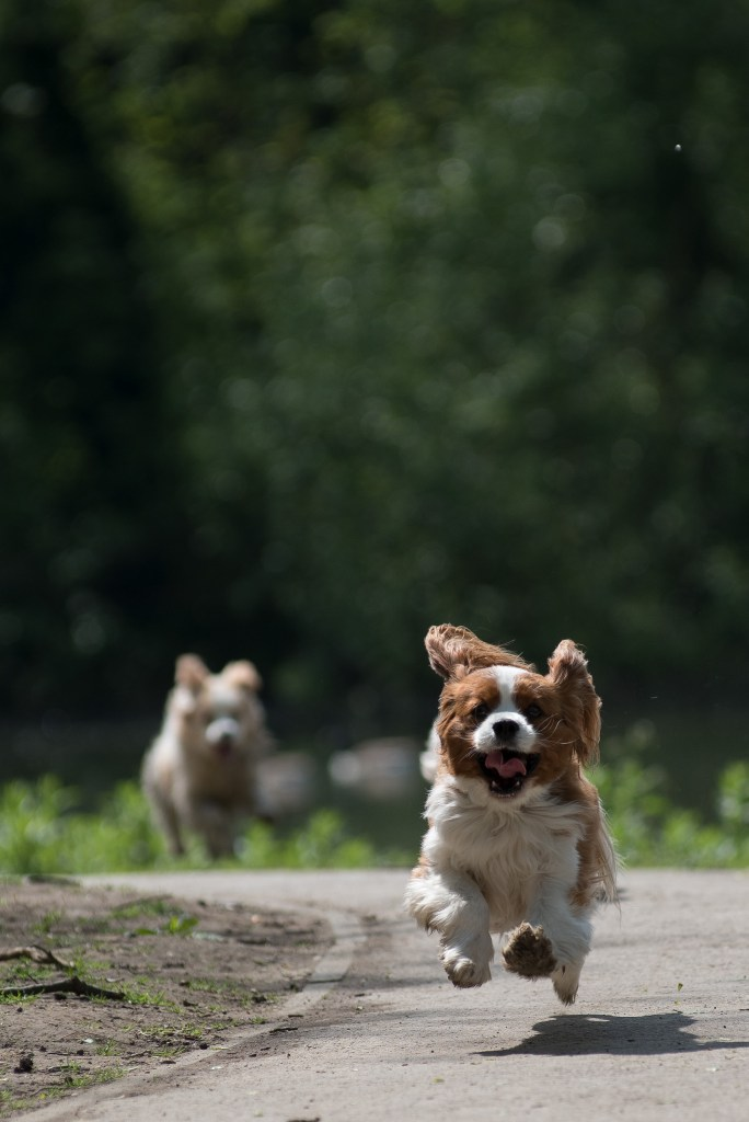 Photo of a dog running