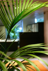 office plant for mediation environment