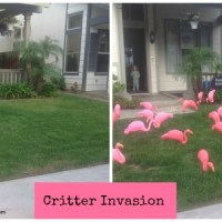 "Surprise Someone On Their Special Day With A ""Critter Invasion"""