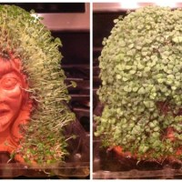 Chia Zombies Put a Green Scream into Your Halloween
