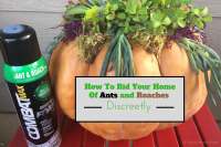 How To Rid Your Home Of Ants and Roaches Discreetly