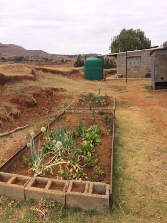 Auch hier sollten eigentlich Tomaten, Mohrüben, Spinat und anderes Gemüse wachsen. Aber wegen der Dürre wächst dieses Jahr nichts. Kein Wasser, kein Leben. Das bekommt man hier hautnah mit.