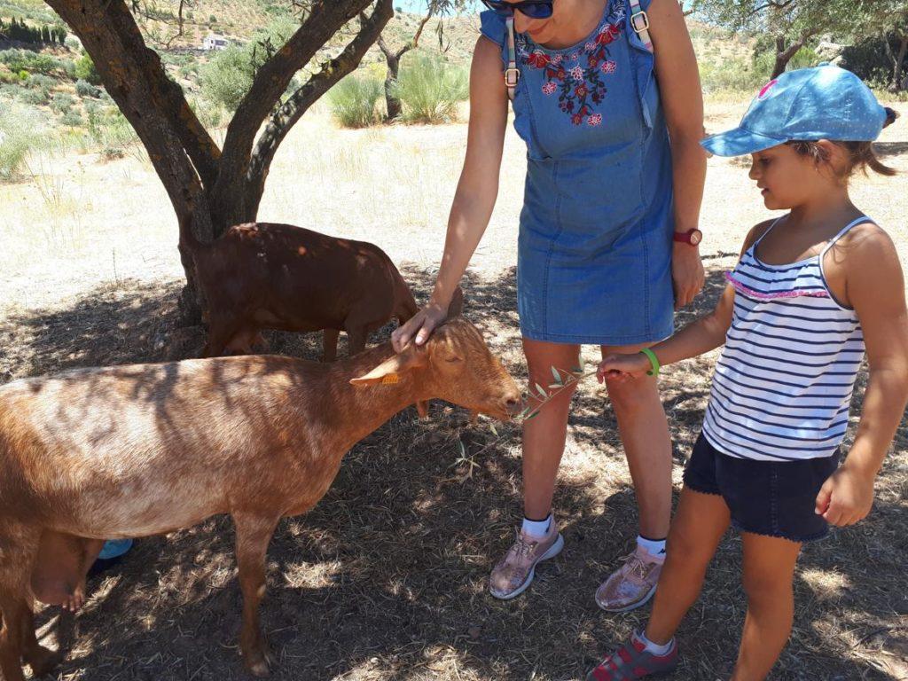 Niña acariciando a cabra en la en la Ruta de la Cabra malagueña, Casabermeja, Málaga