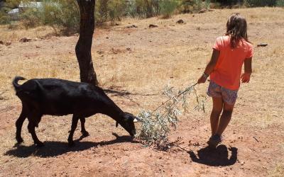 Entre queso y cabras en la ruta de la cabra malagueña