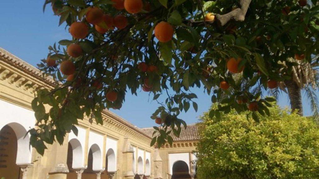 Cordoba-Mezquita-Patio-naranjos1-Familysol