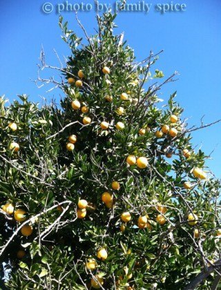 Our Visit To An Orange Grove