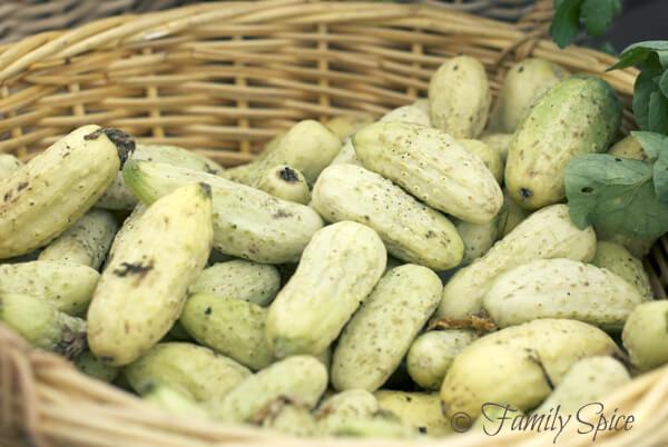 Hillcrest Farmer's Market: White Cucumbers