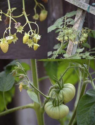 What's Growing in the Garden
