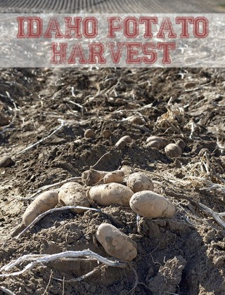 Idaho Potato Harvest Tour 2014 #IdahoHarvest