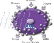 Cell voltage