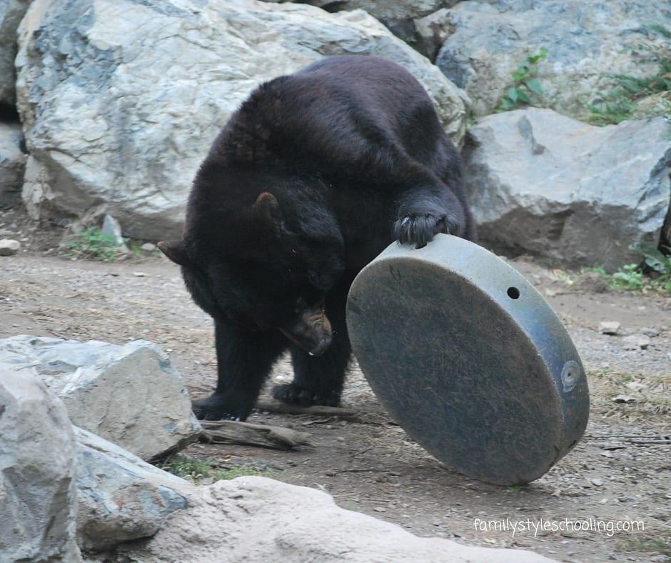 Stone Zoo Stoneham, MA