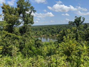 High bluffs and scenic views! Torreya State Park~