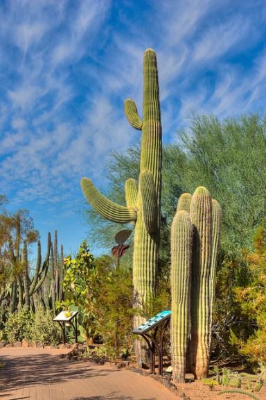 Photo Credit: Desert Botanical Garden. Used with permission.