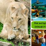 Roar and Explore Adventure Getaway in Columbus, Ohio