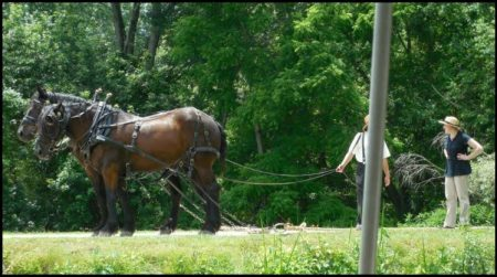 The two Percheron horses and their leads. This was how the canal boats made it up and down the canals, and it's how the St. Helena III works, too.
