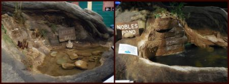 A couple of the ecosystems featured at the museum. These are based on local parks and nature preserves.