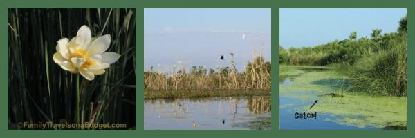 bayou alligator tour