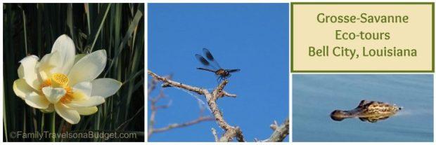 Grosse Savanne Ecotours in Louisiana, #ecotourism #bayou #marshland