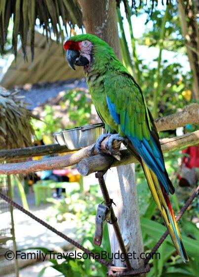 Ardastra Gardens Parrot