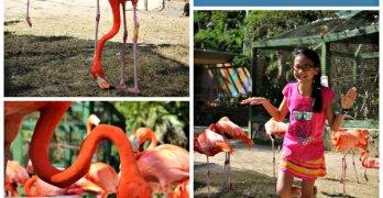 Ardastra Gardens in Nassau: A tropical treat