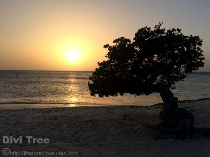 Divi Tree Aruba Sunset by Julia Sayers