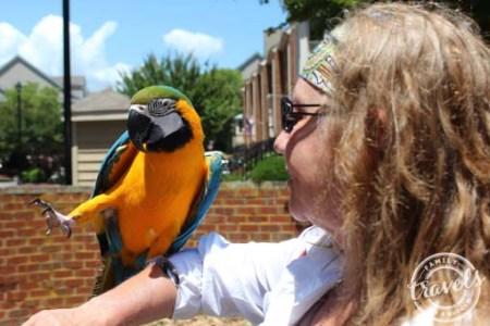 Pirates and Parrots at Blackbeard Pirate Festival, Hampton, VA