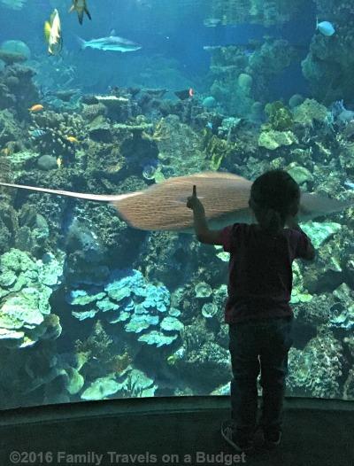 national-aquarium-fun-for-kids