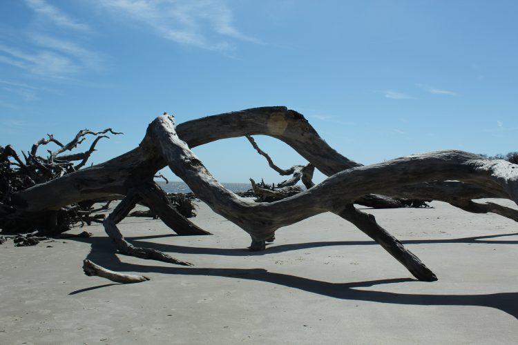 Magical Driftwood Beach: A must see!