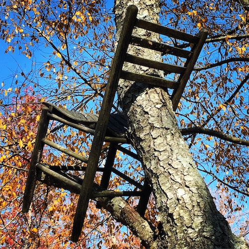 Close up of one chair in the Forest for the Chairs installation at NCMA