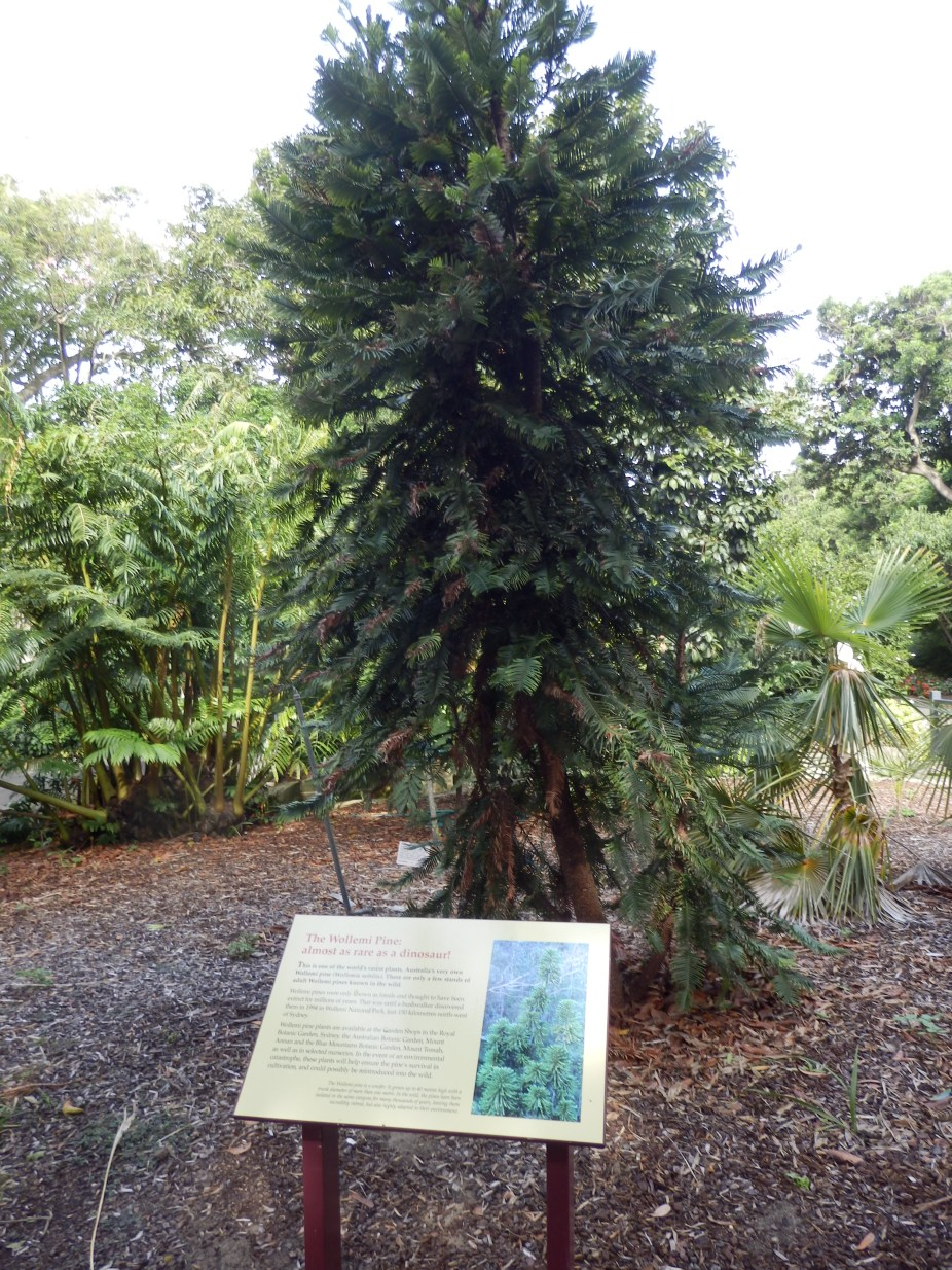 It isn't a mystery but it is one of the rarest trees in the world. Any guesses?