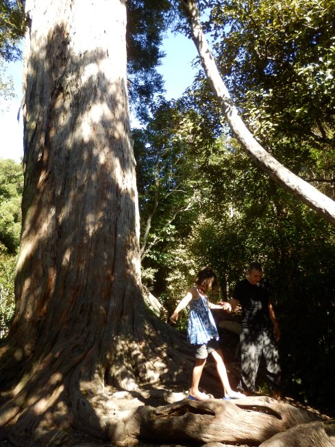 These trees were massive.
