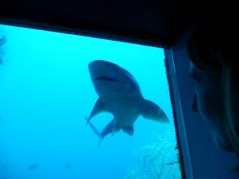 Suprise visitor to marine park.