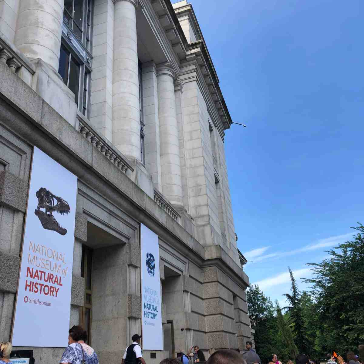 Natural History Museum Washington DC with Kids