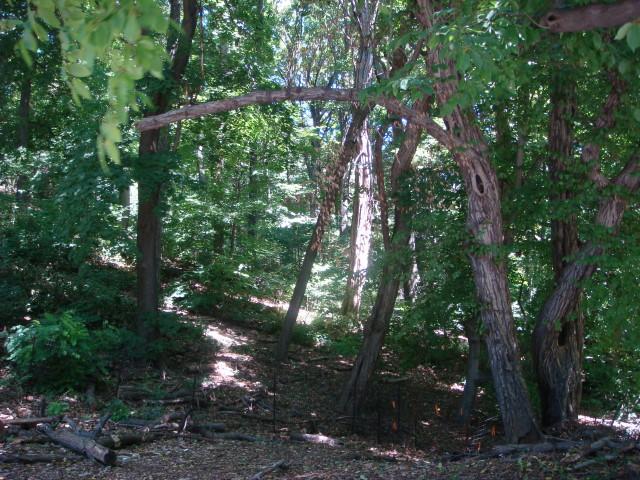 Wild areas1